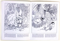 page from Backyard Nature Coloring Book