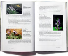 page from Favorite Wildflower Walks in Georgia by Hugh Nourse and Carol Nourse