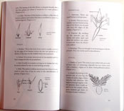 page from How to Identify Grasses and Grasslike Plants by H.D. Harrington