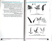 page from Peterson Field Guide to Ferns of Northeastern and Central North America