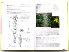 page from Field Guide to the Rare Plants of Georgia by Linda Chafin