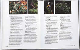 page from Gardening with Native Plants of the South by Sally Wasowski with Andy Wasowski