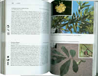 page from Edible Wild Plants by Thomas S. Elias and Peter A. Dykeman