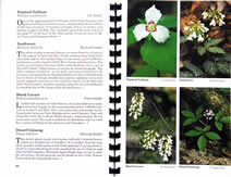 page from Great Smoky Mountains Wildflowers by Robert W. Hutson, William F. Hutson and Aaron J. Sharp