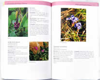 page from Southern Appalachian Wildflowers by Barbara Medina and Victor Medina