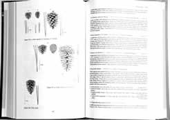 page from Woody Plants of the Southeastern US: A Winter Guide by Ron Lance