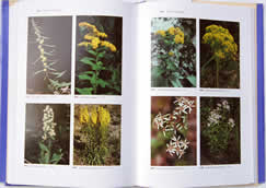 page from Wildflowers of the Eastern United States by Wilbur H. Duncan and Marion B. Duncan