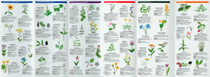 page from Medicinal Plants Pocket Naturalist