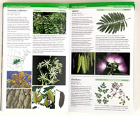 page from Field Guide to Trees of North America by Bruce Kershner, Daniel Mathews, Gil Nelson, Richard Spellenberg